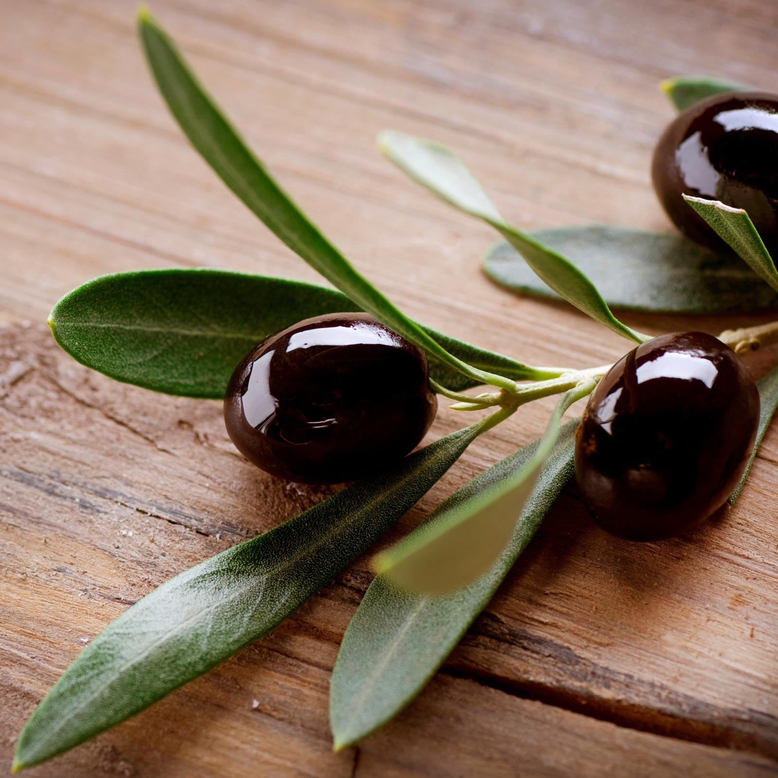 olives-nature-plant